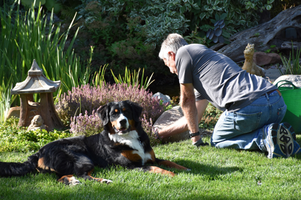Our garden helper (1/6)